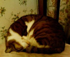 image/peachpit-2005-12-31T01:11:00-1.jpg